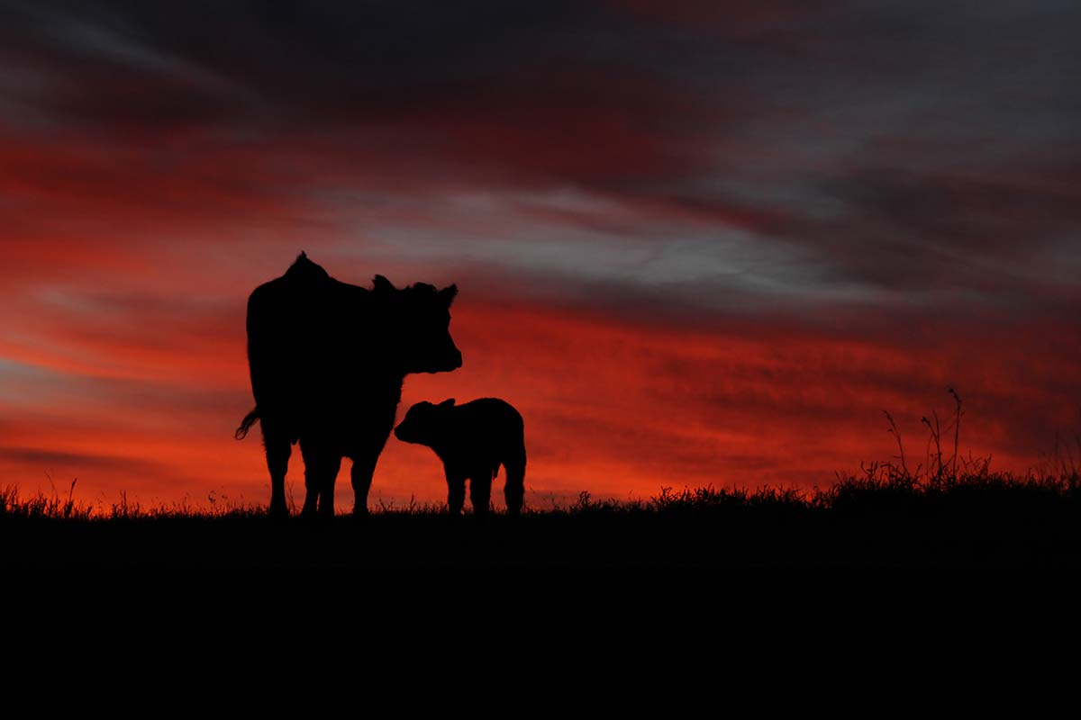Mom and her baby in a January sunrise